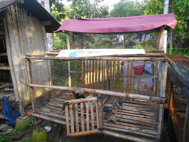 Gambar Desain Gambar Kandang Ayam Bangkok Gaweanomah Jago ...