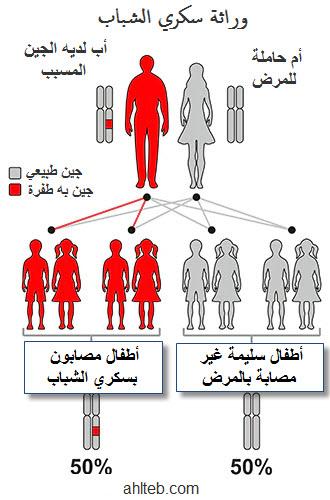 نسبة انتقال وراثة جينات سكري الشباب الناضجين