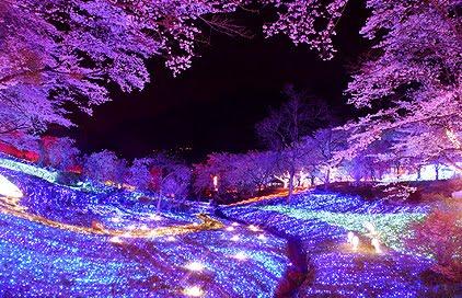 【保存版】一度は見たい絶景の桜の名所。神奈川県で有名なサクラの人気お花見スポット11選(開花情報・見どころ・アクセス方法など、定番/穴場情報まとめ)
