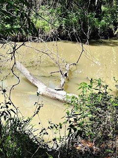 Las Moras Creek, Carpe Diem, Carp(e) Diem, Fort Clark Springs, Brackettville Texas, Texas Fly Fishing, Texas Freshwater Fly Fishing, Fly Fishing Texas, Las Moras River