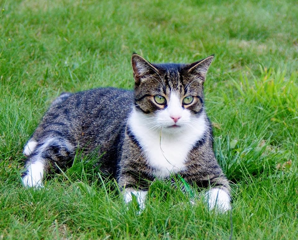 dauerniesen bei katzen