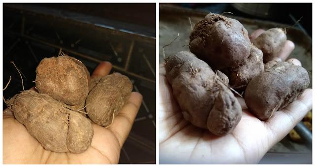 chinese-potato