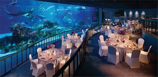 Tổ chức tiệc sinh nhật tại S.E.A Aquarium