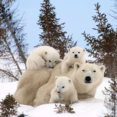 amor e afeto no reino animal