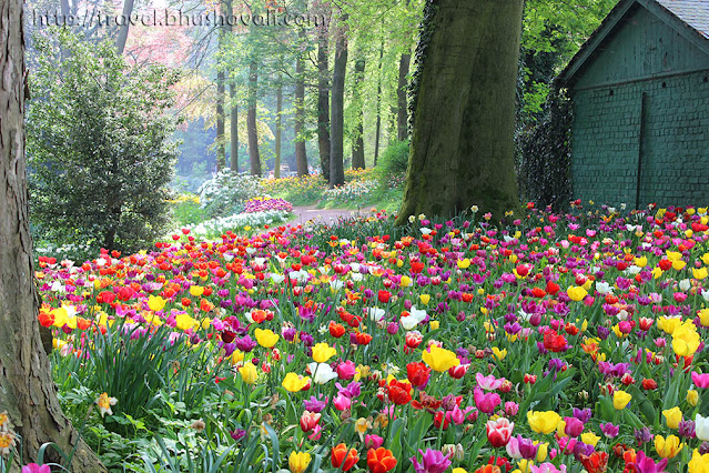 Floralia Brussels Belgian Tulip Festival