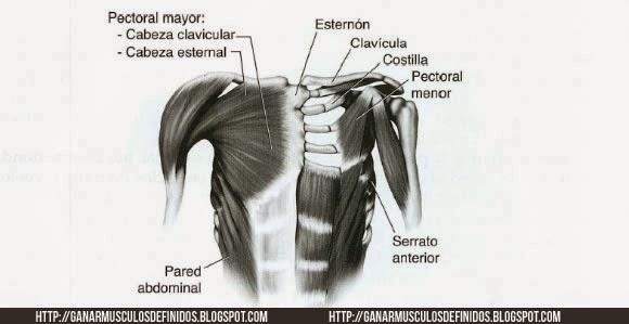 Anatomia Pectoral -