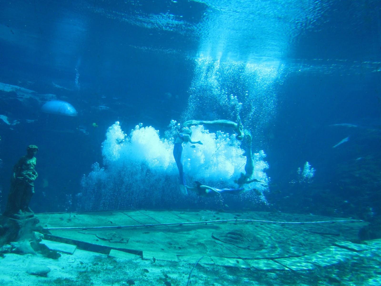 1 Downtown Aquarium Denver Colorado Mystic Mermaid Show Includes Conservation Messages S 20 Children 14 2 Ripley Myrtle Beach Sc