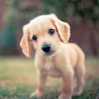 εκπαίδευση σκύλων εντολή έλα 1