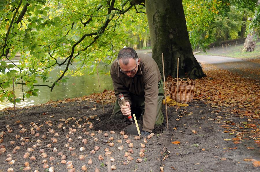 Plantando bulbos en otoño en Keukenhof