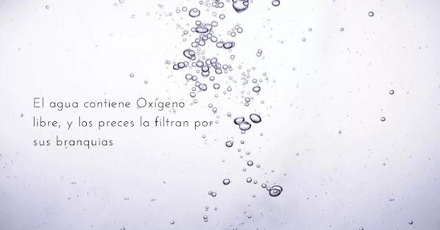 oxígeno disuelto en agua