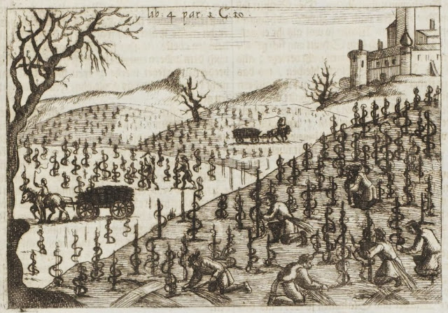 17th century engraving - Early modern farming: tending to vines on mountainside