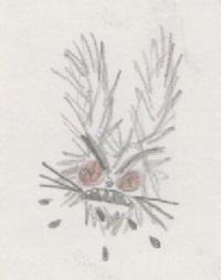 Lapin loup-garou