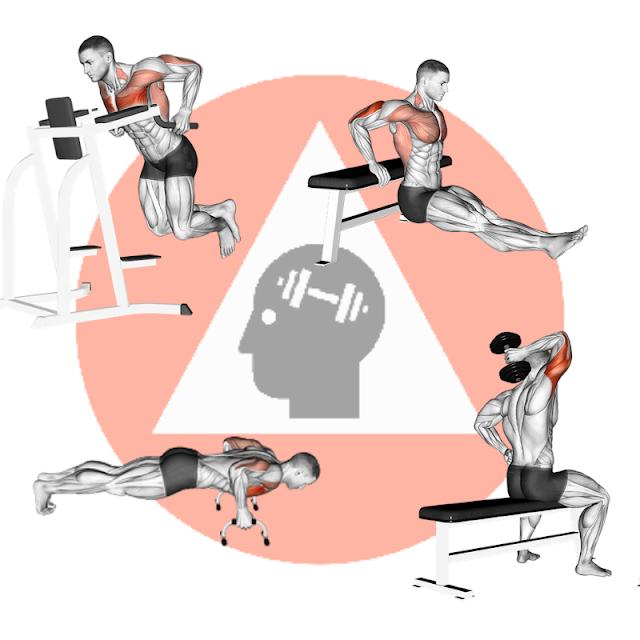 musculation fitness poids du corps haltére triceps pectoraux