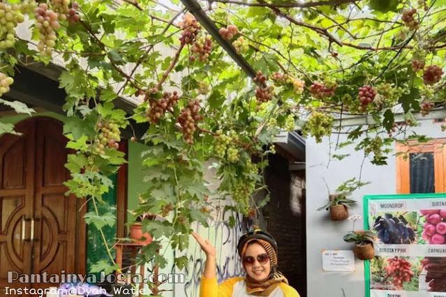 kampung anggur bantul