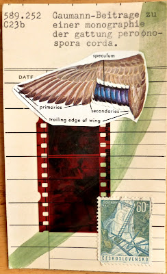 film negative postage stamp Fluxus library card mail art collage