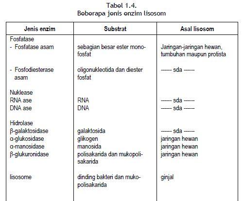 Beberapa jenis enzim lisosom