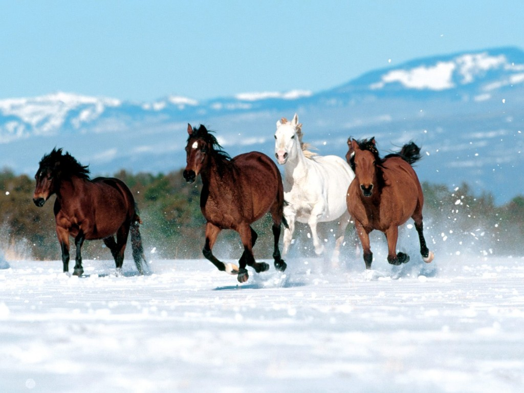 Amazing   Wallpaper Horse Nature - horse-wallpaper+(8)  Collection_46378.jpg
