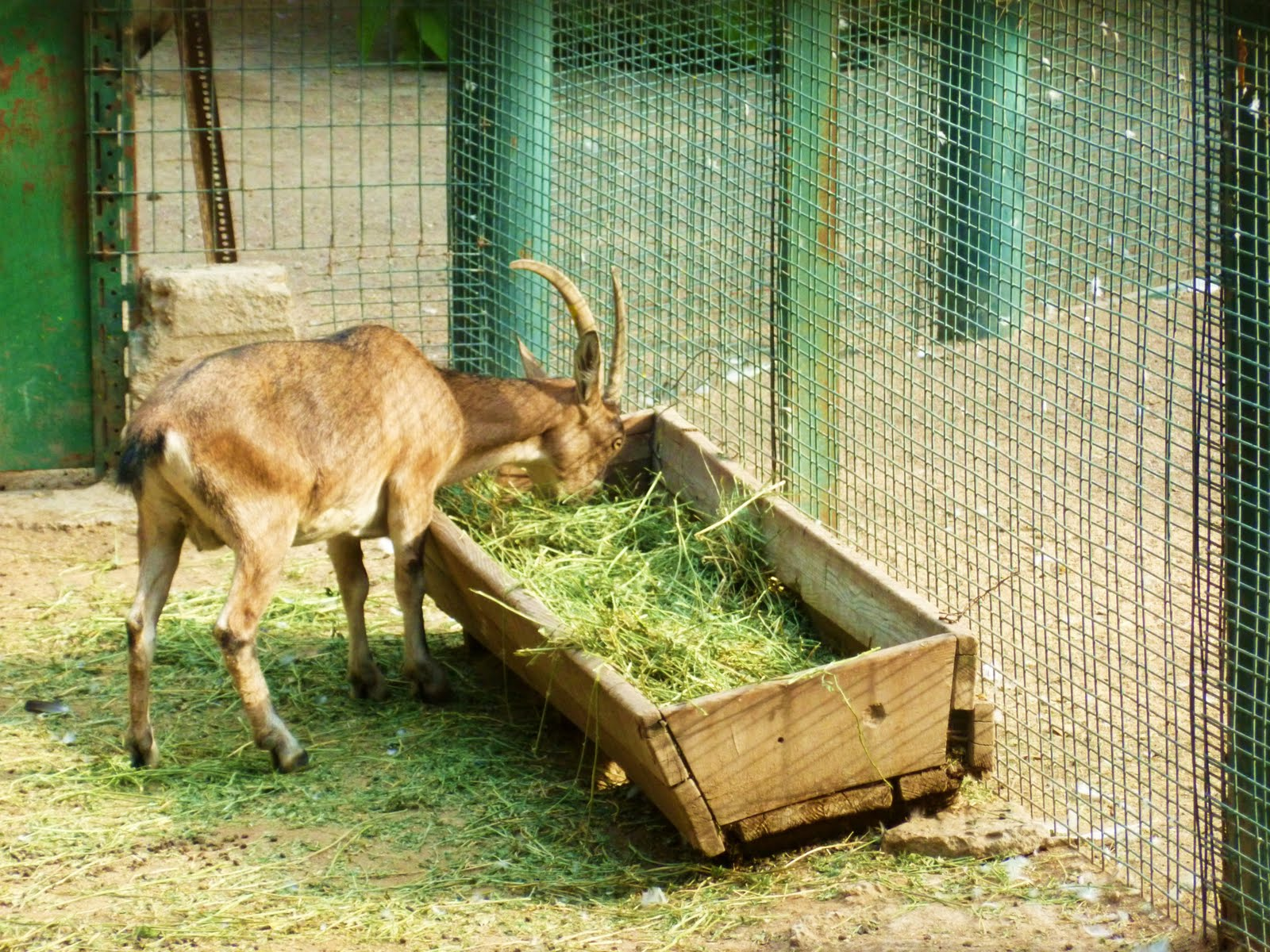 CUT and DRY  Animals in Captivity