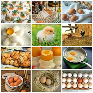 Rincian Modal Usaha Telur Ayam (Serta Tips Peternakannya)