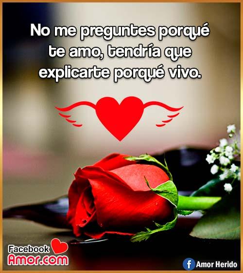 frases de amor con flores