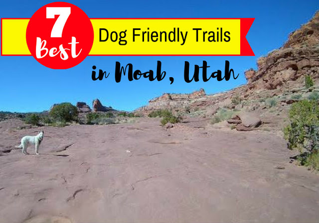 7 Best Dog Friendly Trails in Moab, Utah