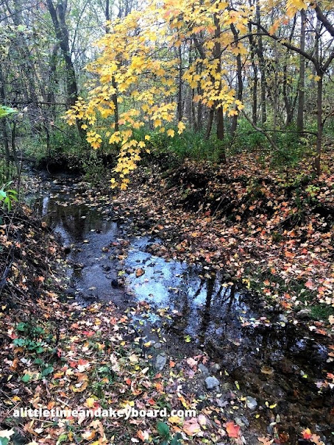 Blackberry Creek curling through Bliss Woods Forest Preserve.