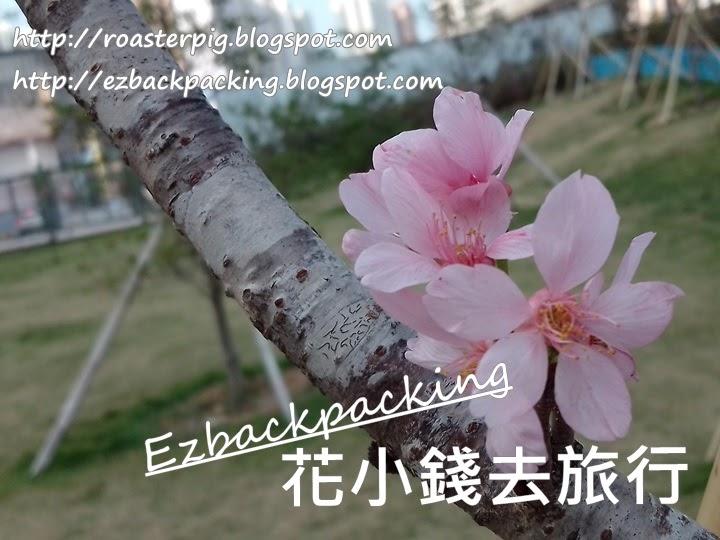 馬鞍山櫻花