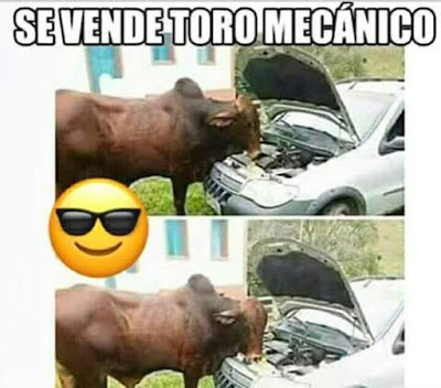 Se vende toro mecánico
