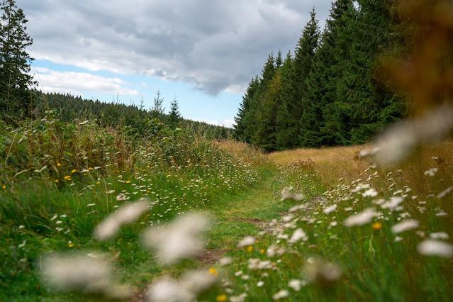 Drei-Täler-Tour und Stadtrundgang Bad Harzburg  Wandern im Harz  Eckerstausee - Radauwasserfall 14