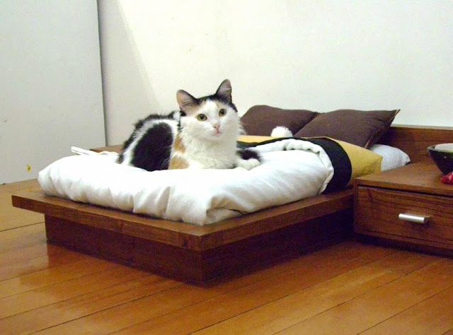 3. This cat who has his own set of cat-sized furniture