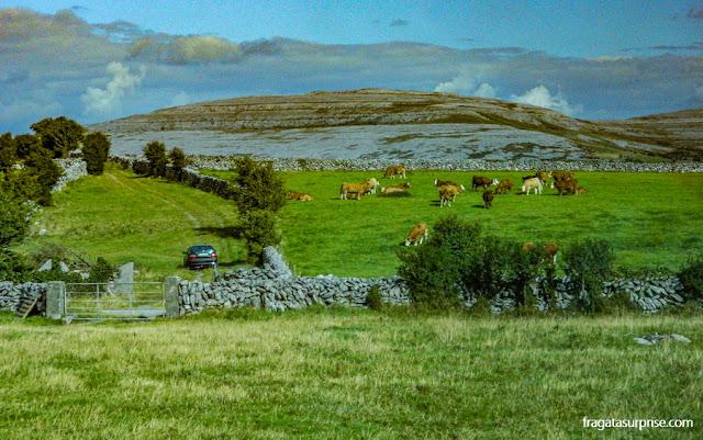 Paisagem rural da Irlanda no Condado de Clare