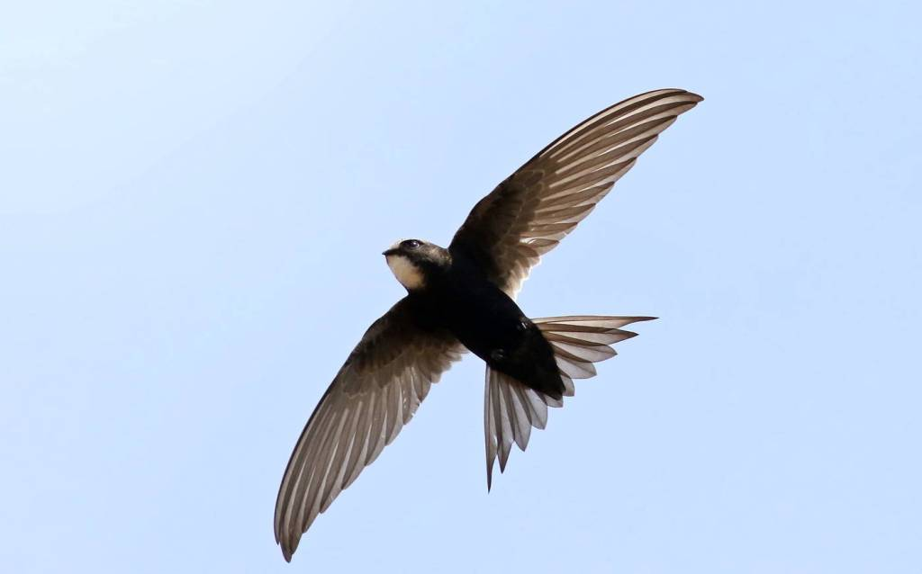 Swallow, Swift, Martin? How to Tell the Difference Between TheseIncredible Birds