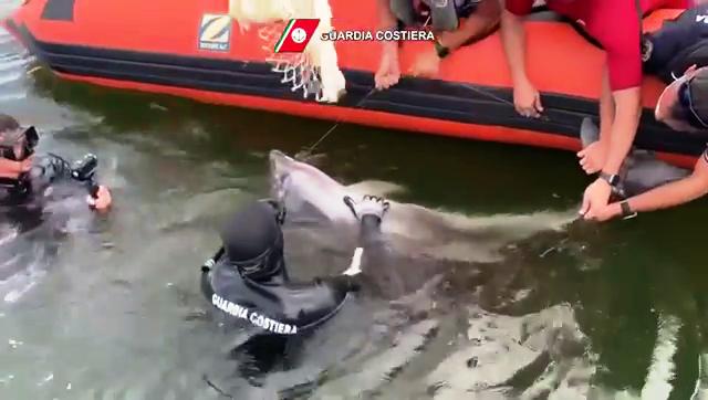 Cucciolo di delfino salvato dalla Guardia Costiera di Cagliari. Il VIDEO