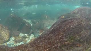 川の中を泳ぐ魚