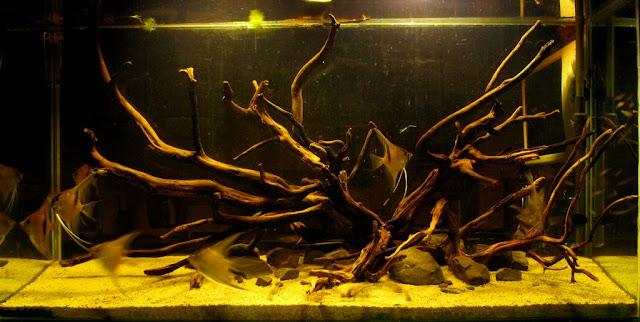 AKWAPASJA OPOLE - AKWARIUM BIOTOPOWE, biotop, biotope, aquarium biotope,