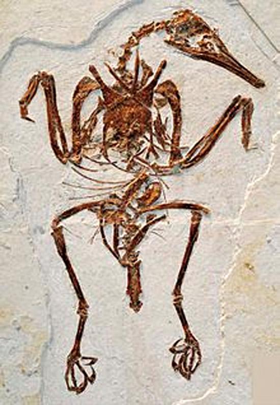 Encontrados Fósseis de aves da época dos dinossauros em terreno de SP - Img3