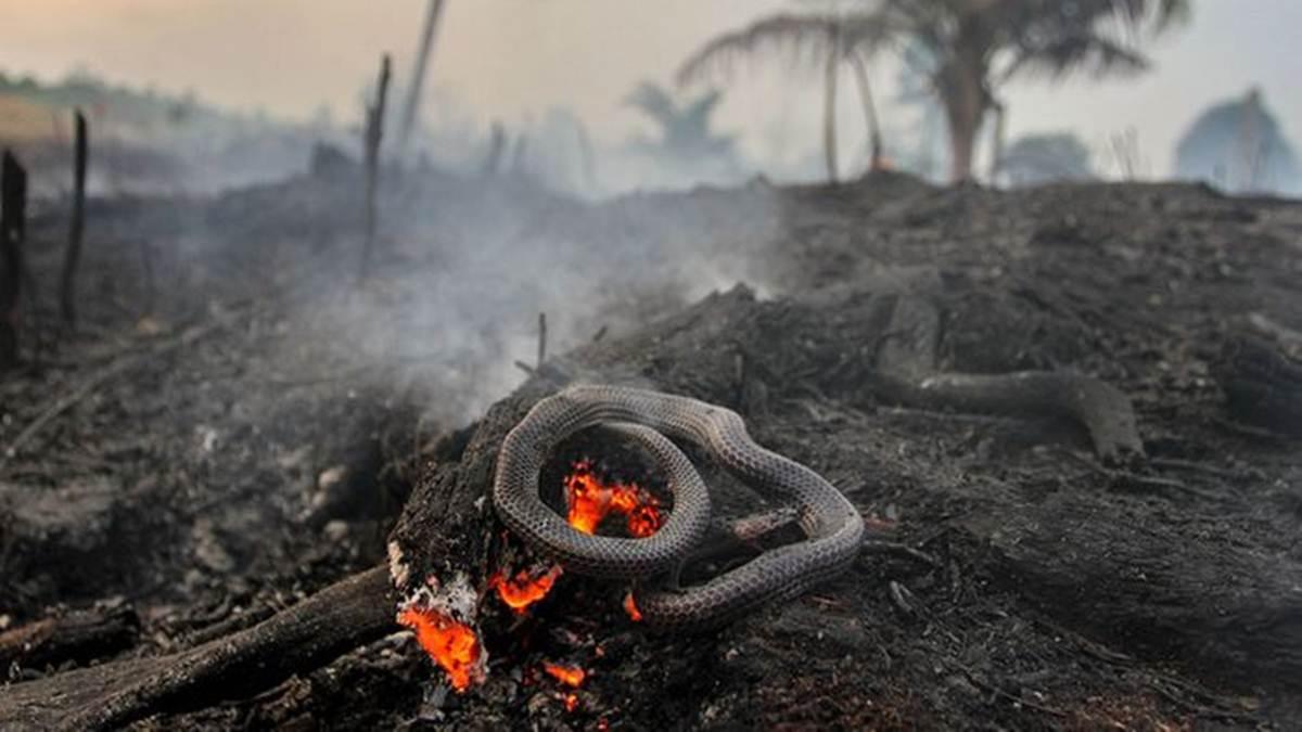 ular terpanggang di karhutla gambut Pekanbaru