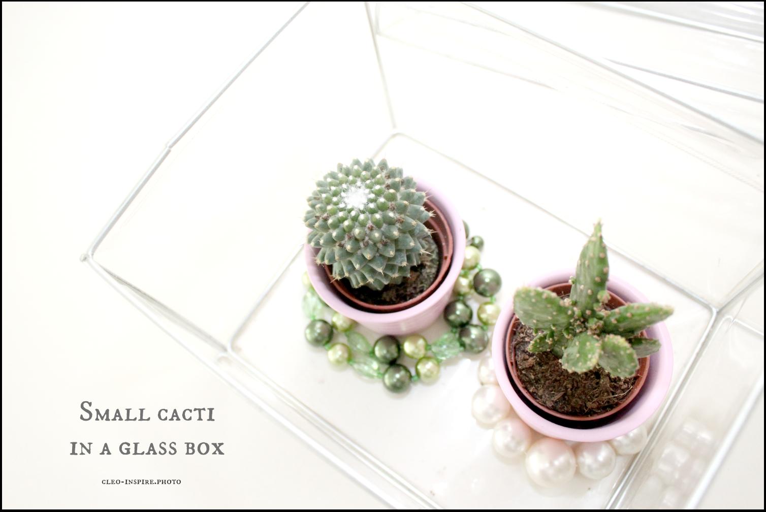 pojemnik dla kaktusa