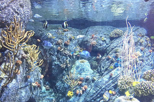 things to do in los angeles - aquarium of the pacific