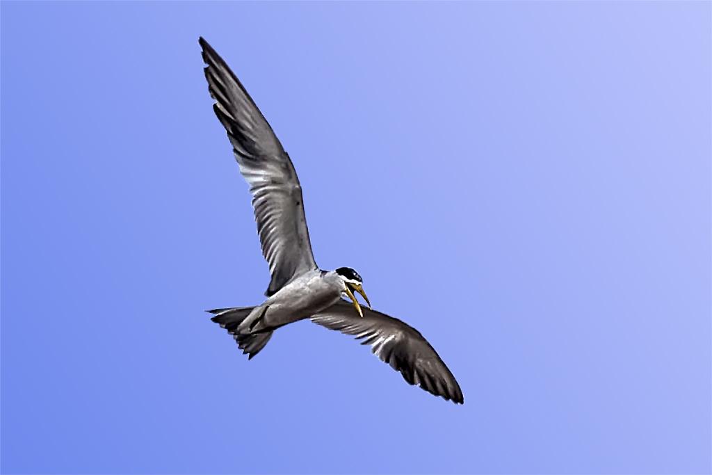 Ave en vuelo sobre el Amazonas