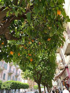 Bitter orange - arancio amaro - ornamentale in La Spezia