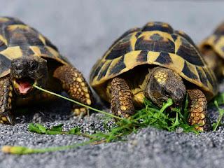 nafsu-makan-kura-kura.jpg