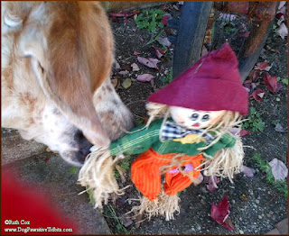 Dog Valentino Greets A Scarecrow