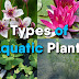 What are Different Types Of Aquatic Plants