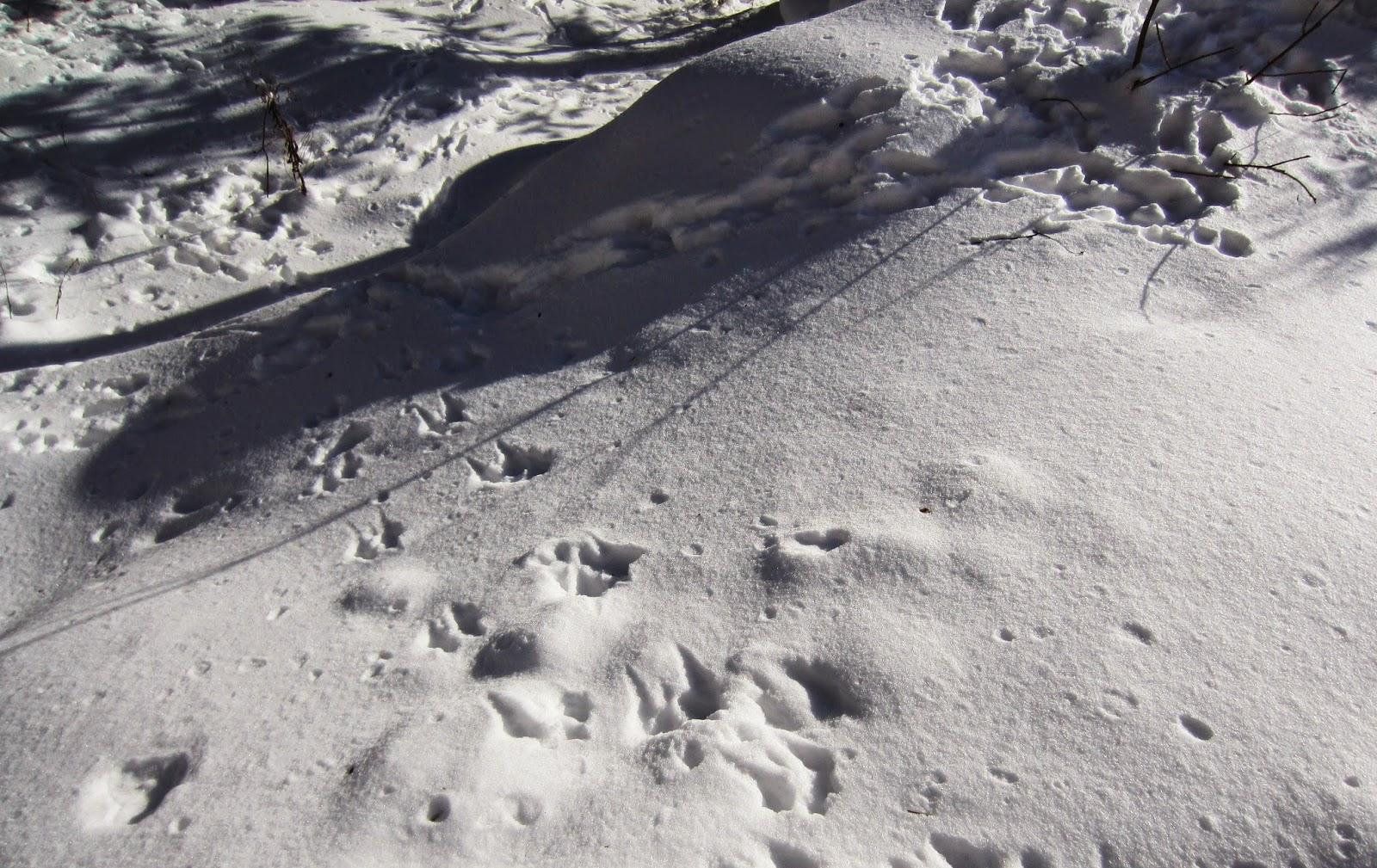 lumi, jäljet, luonto, talvi
