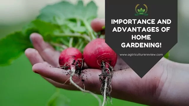importance and advantage of home gardening by agriculture review