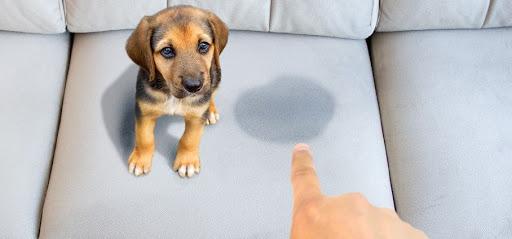 Cómo limpiar manchas de orina del sofá