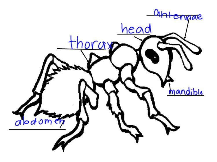 Mrs. Kimbrell's Kindergarten: Ants...
