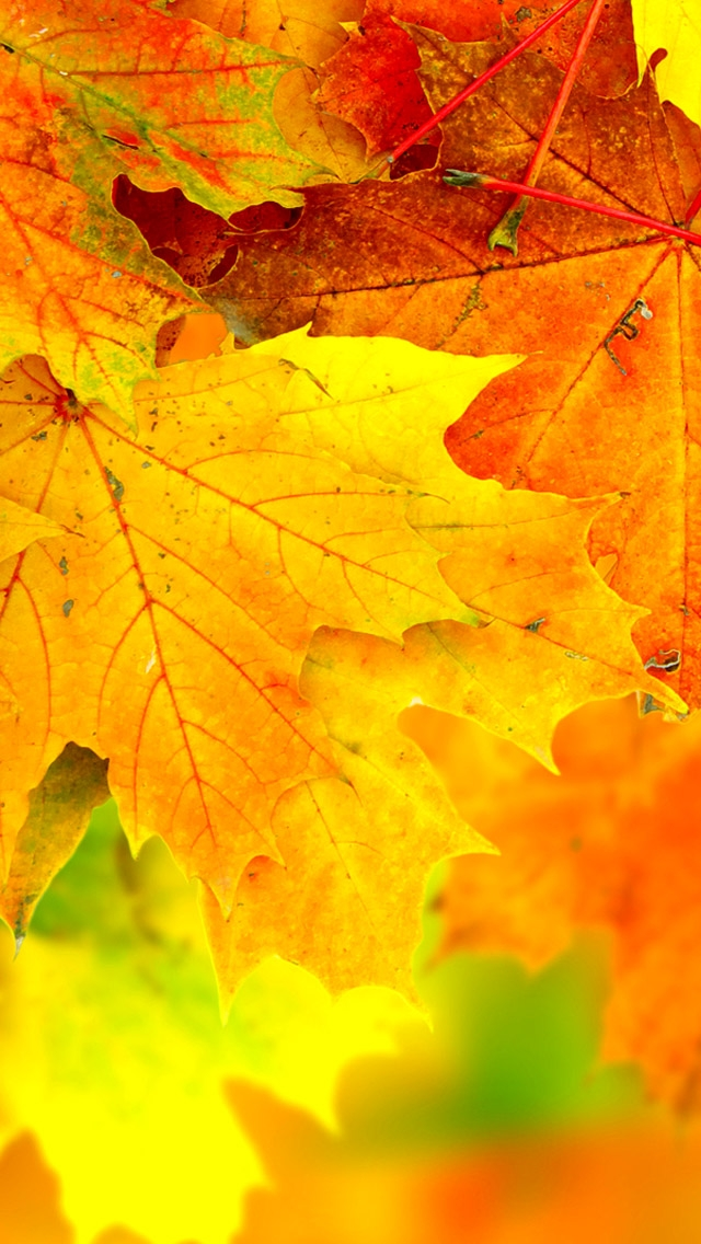 iPhone Wallpapers: Awesome Autumn iPhone Wallpapers
