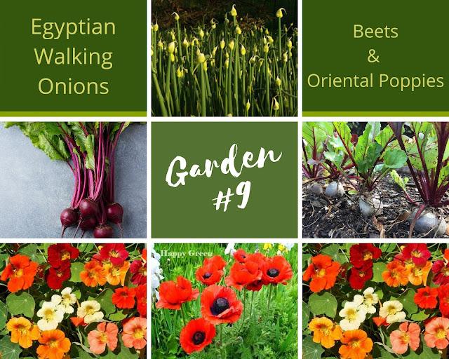 Rock-n-Zen Garden Plot #9 plants identification.